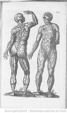 Planche p.173 : anatomie humaine. La circulation sanguine. Historia anatomica humani corporis et singularum eius partum multis.1600 https://pinterest.com/pin/287386019947522015. André Du Laurens. (1558-1609 https://pinterest.com/pin/287386019946881538/).