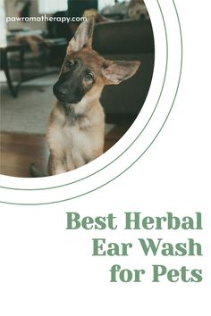 Herbal Ear Wash for Dogs and Cats. Natural, handmade ear cleaner created by holistic veterinarian, Dr. Deneen Fasano. All natural ingredients using herbs and essential oils. Pet Care Tips, Dog Care, Dog Ear Wash, Dog Ear Cleaner, Dog Health Tips, Dog Nutrition, Puppies Tips, Yorkie Puppy, Dog Products