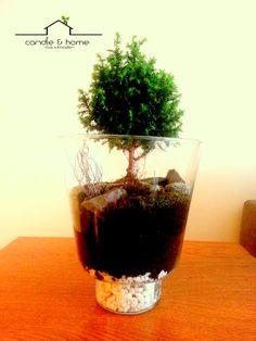 Little forest ..  #urbangarden #urbangardening #plant #plants #terrarium #teraryum #handmade #diy #home #homedecoration #deco #art #design #decoration #indoorgardening #turkey #türkiye #earth #moss #microecosystem #ecosystem #interior #love #candleandhome