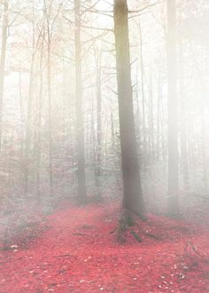 If I could figure out how to capture a look like this in paper and paint, I totally would tackle a look like this!  Tree photography fairy tale fog and mist photo red by Raceytay, $15.00