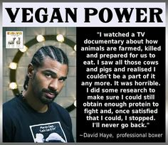 """I watched a TV documentary about how animals are farmed, killed and prepared for us to eat. I saw all those cows and pigs and realised I couldn't be a part of it any more. It was horrible. I did some research to make sure I could still obtain enough protein to fight and, once satisfied that I could, I stopped. I'll never go back."" - David Haye, professional boxer"