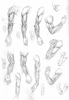 drawing art people arms draw hand human Anatomy muscles biceps ...