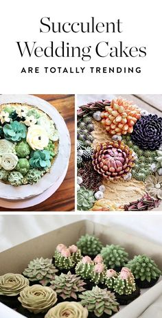 The latest trend to join the fun? Succulent cakes will be at weddings everywhere this summer.