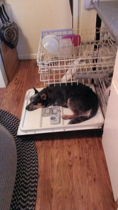 ACD's sleep in the strangest places!  :)