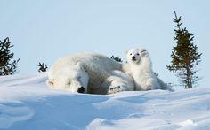 The Comedy Wild Life Photography Awards: o lado 'divertido' dos animais – O Jornal Económico