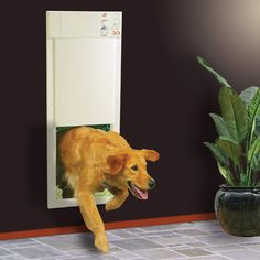This doggie door only opens when it senses your pet approaching via a special collar-- burglar and stray animal proof!