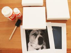 How-To: Mod Podge Instagram Photos to Canvases