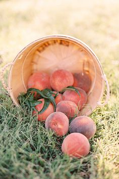 canning shoot styling / concept / florals by lovely little details photography by jessica burke published in southern weddings magazine Fruit And Veg, Fruits And Veggies, Fresh Fruit, Peach Trees, Peach Blossoms, Fresco, Shades Of Peach, Peach And Green, Peach Orange