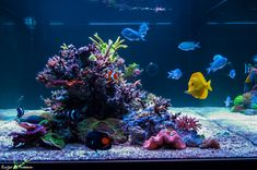 Let's talk stability. Do we really want stability in our reef tanks? With this new trend of reef stability and the hobby switching to stability geared. Saltwater Tank, Saltwater Aquarium, Freshwater Aquarium, Nano Reef Tank, Reef Tanks, Fish Tanks, Glass Aquarium, Reef Aquarium, Water Me