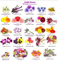 http://www.dvo.com/newsletter/weekly/2013/06-21-572/w_images/edible_flowers.png