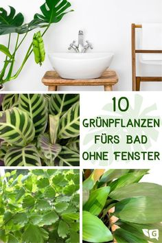 Plants for the bathroom without a window: 10 green plants - Gartendialog. Bad Bunny, Hanging Canvas, Healthier You, Decoration Table, Diy Crafts For Kids, Own Home, Indoor Garden, Flower Power, Herbs