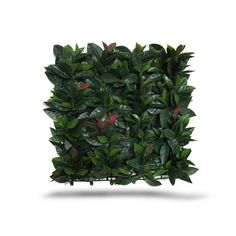 Artificial Laurel foliage panels with large detailed leaves. They have a realistic touch and feel. Ideal to cover any wall, build hedges, cover ugly fences, add privacy and save on water and maintenance. These panels are great for interior and exterior, our greeneries are weatherproof and very easy to install. Laurel Hedge, Lavender Walls, Silk Plants, Plant Wall, Types Of Plants, Artificial Plants, Hedges, Interior And Exterior, Indoor Outdoor