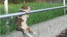 忧郁萌宠走红 相思少女猫趴栏杆上望着青年_探秘频道_长城网
