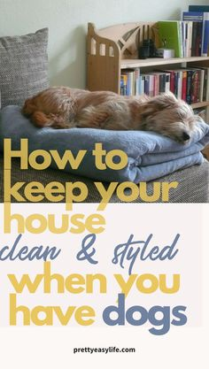 Easy solutions to keep your house clean and styled with dogs and pets