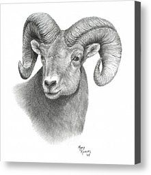 Bighorn Sheep by Mary Rogers - Bighorn Sheep Drawing - Bighorn Sheep Fine Art Prints and Posters for Sale