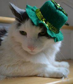 St Patrick's Day Kitty!