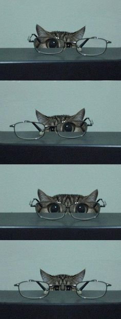 Smarty cat