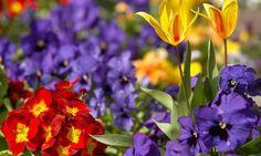 Composición para principios de primavera