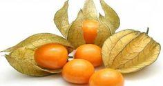 Ce petit fruit est un véritable trésor: il guérit la prostate et prévient le cancer de l'estomac et du côlon - Santé Nutrition