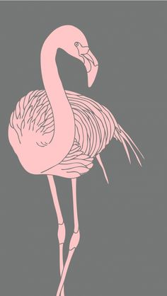Light Pink Flamingo. Tap to see more beautiful iPhone Wallpapers! Nature, animals, illustration drawing. - @mobile9