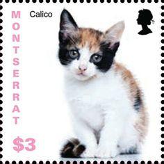 El 7 de noviembre de 2013 Montserrat emite un conjunto de sellos que muestran gatitos de razas no especificadas.
