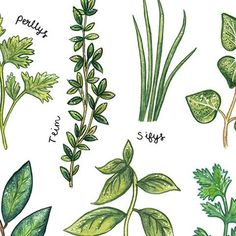 Print - Culinary Herbs - Welsh-Picture / SIgn-The Welsh Gift Shop Welsh Language, Welsh Gifts, Welsh Blanket, Print Finishes, Kitchen Prints, Quilting Designs, Plant Leaves, Herbs, Welsh