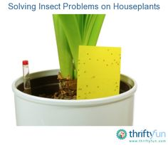 This guide contains solutions for insect pests on houseplants. Insects and mites can appear on houseplants at any time of the year and they are not always easy to see.
