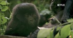 15 Mind-Blowing Science and Nature Documentaries on Netflix: August 2017