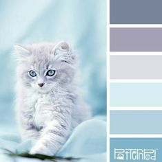 Soft blue color palette with understated lavender hues in the grey. For my bedroom. Scheme Color, Blue Colour Palette, Colour Schemes, Color Combos, Design Seeds, Decoration Palette, Baby Blue Colour, Baby Blue Paint, Colour Board