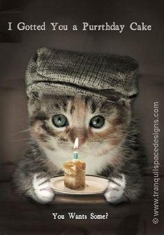 Cat Birthday Wishes Happy Birthday Wishes Quotes, Happy Birthday Wishes Cards, Happy Birthday Celebration, Birthday Blessings, Funny Happy Birthday Images, Happy Birthday Funny, Funny Birthday Cards, Happy Birthday With Cats, Happpy Birthday