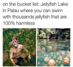 On the bucket list: Jellyfish Lake in Palau where you can swim with thousands jellyfish that are harmless - iFunny :) Beautiful Places To Travel, I Want To Travel, Oh The Places You'll Go, Cool Places To Visit, Photo Trop Belle, Destination Voyage, Vacation Places, Vacations, Future Travel