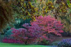 Fall colours in a garden in north western Italy