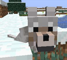 This cute baby wolf from Minecraft is cute!! You get a baby wolf if you have 2 tamed wolves. You have to feed them any kind of meat or 2 bones to get them in love mode. Then you will have a baby wolf!!! Minecraft Wolf, Minecraft Baby, Baby Wolves, Wolf Face, Disney Descendants, Having A Baby, Girls Best Friend, Backyard Landscaping, Cute Babies