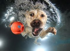 This Photographer Took Photos of Dogs Fetching Balls Underwater…And They Are Hilarious!