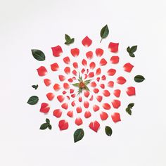 A rose, by its deconstructed form. Fong Qi Wei.