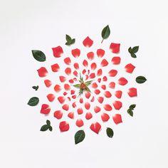 Des fleurs désassemblées - La boite verte