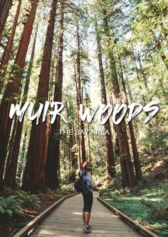 Hiking in the Pacific Coast - Muir Woods - California