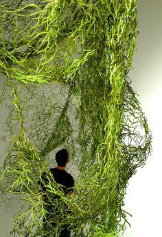 Algues Vitra