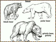 Favorite is the grizzly