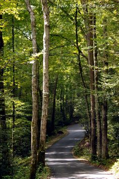 Beautiful drive in the Smoky Mountains - Roaring Forks.