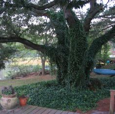 backyard God tree
