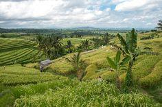 Etape 4 : Rizières de Jatiluwih, Bali