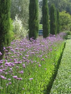 A combination of tall cypress trees, jaunty purple verbena bonariensis and a closely clipped geometric privet hedge make a stunning entrance to the garden along this driveway to Peter Janke's home. Back Gardens, Outdoor Gardens, Italian Garden, Garden Cottage, Meadow Garden, Garden Path, Garden Borders, Verbena, Backyard Landscaping