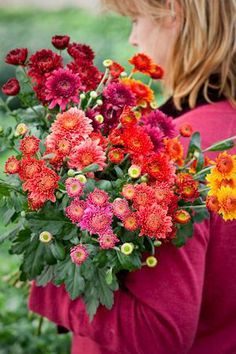 Sarah Raven can even make chrysanthemum's look glorious