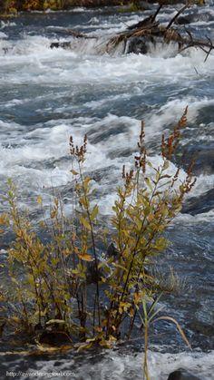 "connie-awanderingsoul: "" Deschutes River, Oregon """