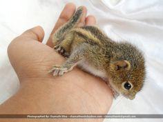 Baby Squirrel (2012-10-06) - 10