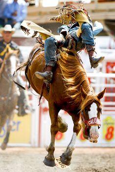 Bareback Bronc Riding - Calgary Stampede - Calgary, Alberta (Canada)