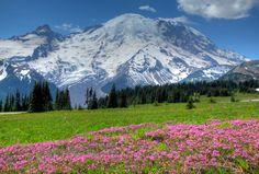 Mt Rainier heather