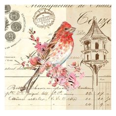 Bird Sketch 1 Giclee Print by Chad Barrett at Art.com