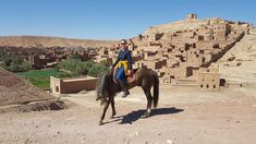 Horse riding Ait Ben Haddou - Dar Equestre Horse Riding, Camel, Lion Sculpture, Horses, Statue, Animals, Art, Ride Or Die, Horse